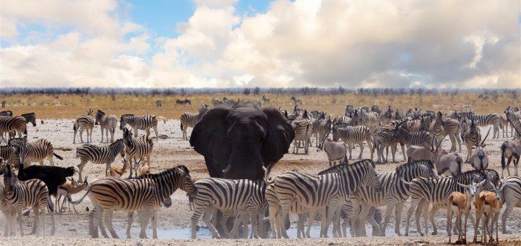 A Strange Herd