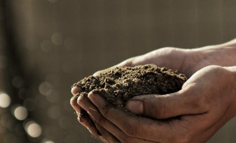 What Kind Of Soil Are You? – August 9th