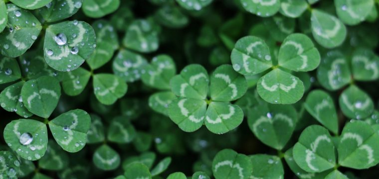 St. Patrick and the Gospel – March 28th